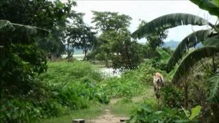 Bangladesh Land for Sale, Sylhet Part 2