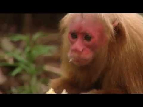 Mini Monkeys of Brazil | Storyteller Media