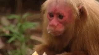 Mini Monkeys of Brazil | Storyteller Media