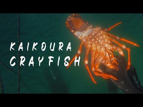 Diving Kaikoura 2019