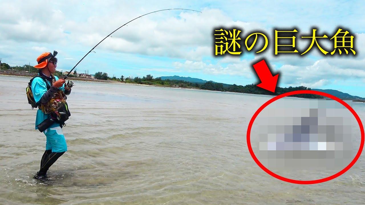 【激レア】水深10㎝の場所で小判の形をした巨大魚を釣りました