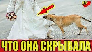 Никто на свадьбе не знал, что она скрывала под платьем, но собака быстро поняла, что что-то не так.