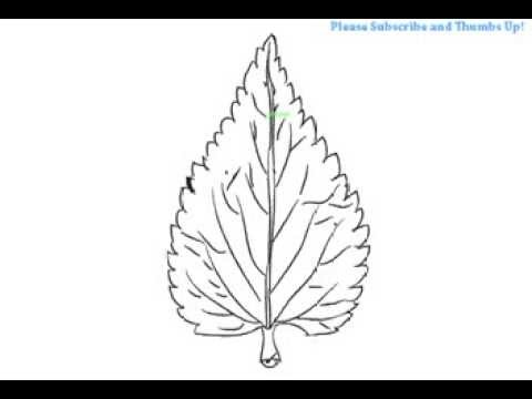 How to draw a simple leaf