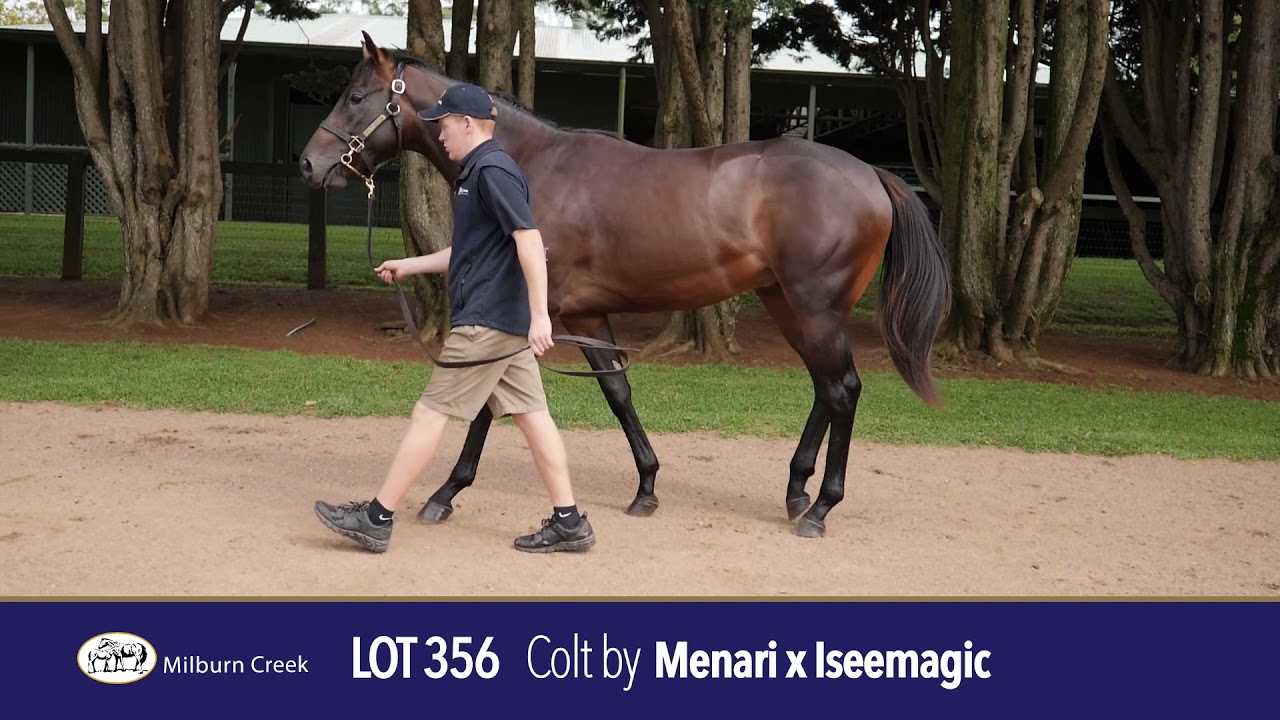 Lot 356 Easter Yearling Sale