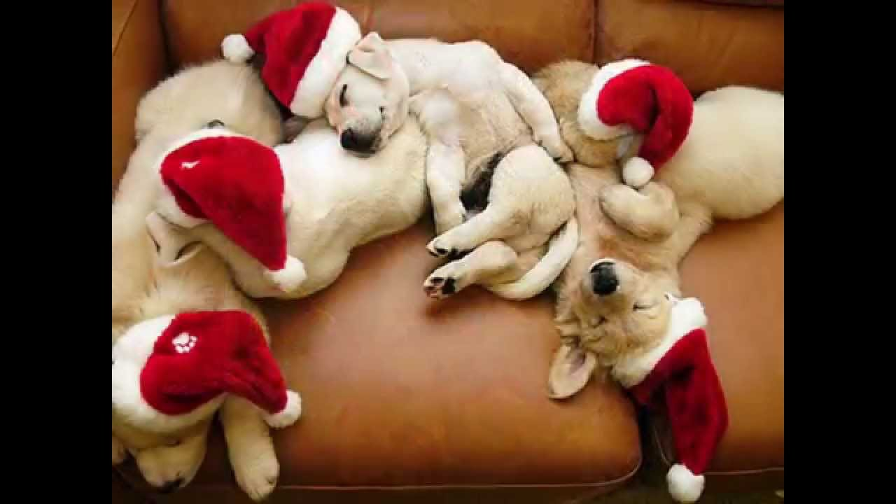 Funny and heart-warming Christmas animal compilation - YouTube
