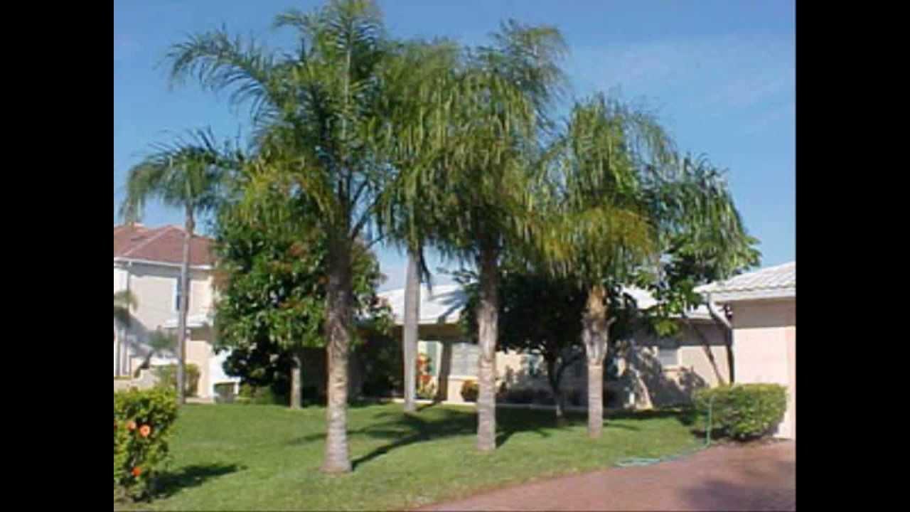 Tipos de palmeras youtube for Tipos de jardines