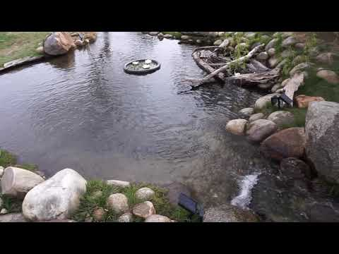 How My Backyard Trout Pond Is Designed