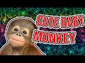 Cute, Funny Baby Monkey
