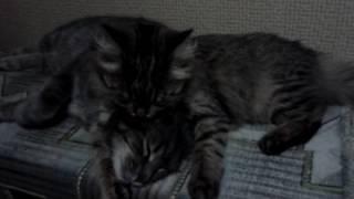 Самые нежные коты