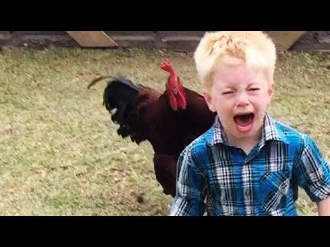 Funny Chickens Chasing Troll Babies and Kids|| Funny Baby And Pet