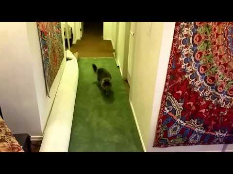 Can you play fetch with a cat?