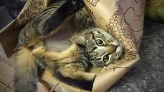Funny Cats 😻 Funny Cats Epic Fails (Part 1) [Epic Life]