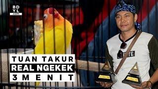 Lagi Viral!! Kemunculan Lovebird Tuan Takur REAL NGEKEK 3 Menit