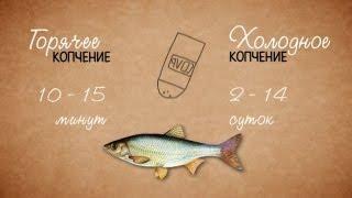 Особенности горячего и холодного копчения рыбы(Чем отличается холодное копчение рыбы от горячего? Почему лучше не использовать «жидкий дым»? Смотрите..., 2013-02-27T12:46:09.000Z)