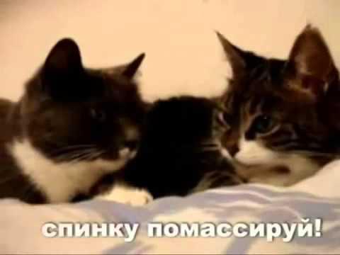 Первый кошачий секс