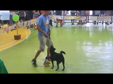 dog show - part 1