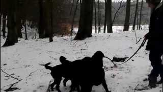 003 Mönchsteich, Trittau [ D ] 15-02-2013