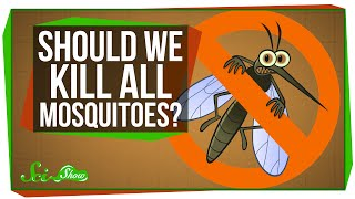 Repeat youtube video What If We Killed All the Mosquitoes?
