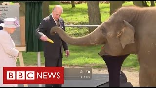 Prince Philip remembered as pioneer of wildlife conservation - BBC News