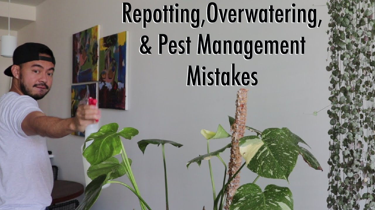Houseplant Fails | How to Fix Indoor Plant Care Mistakes