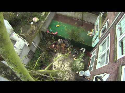 Esdoorn kappen aan de Schietbaanlaan in Rotterdam