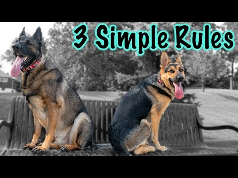 3-things-to-remember-when-training-your-german-shepherd!