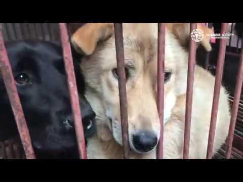 South Korea Dog Meat Market Closed