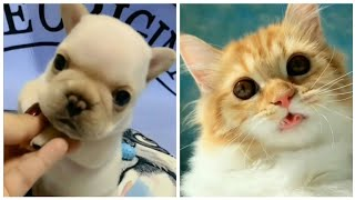 Cute animal videos.Funny moments of cute pets.Cute cat and cute dogs.Funny animals collection#P38.
