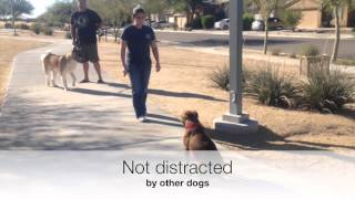 Anthem Dog Training,