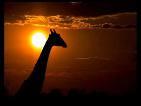Infernal : Serengeti (Bliss Mix)