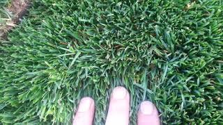 видео Какую газонокосилку лучше купить для ухода за газоном ( лужайкой )?