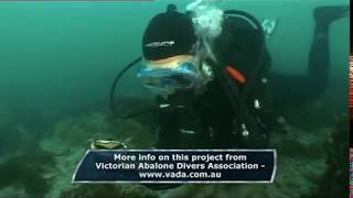 Series 11 - Abalone Virus - Episode 11