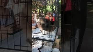 День бездомных животных, Ростов-на-Дону
