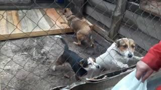 СПАСЕНИЕ СОБАК ОТ ЖЕСТОКОЙ  СМЕРТИ! Собаки заплакали от радости! Вернулись за собаками в приют!