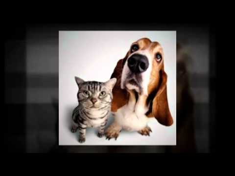 Pet Bounce – Dogs and Cats Athritis Relief