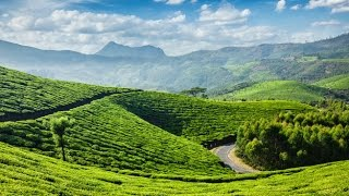 Munnar Tea Plantations | Kerala | Heaven 4k(Ultra HD)