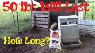 How Much Feed Do Piglets Eat