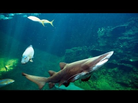 Moment shark tank bursts in China shopping centre