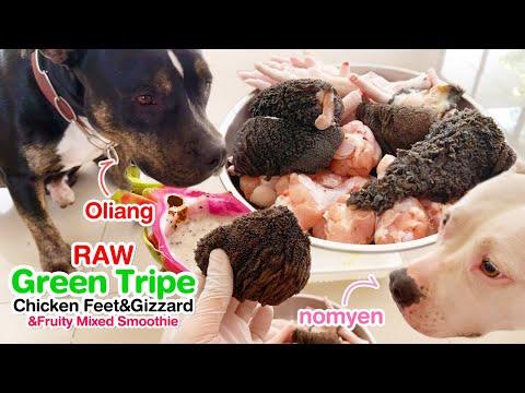 pit-bulls-eat-raw-green-tripe&chicken-feet+wing+dragonfruit-smoothie-[asmr]-barf-mukbang-犬が生の肉を食べるl