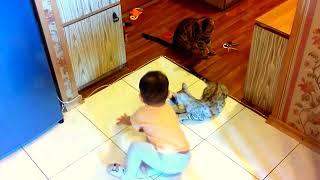 бенгальская кошка и ребенок - питомник кошек Lantana Fly  -