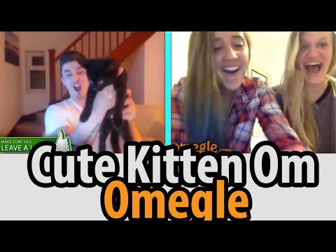 cute-kitten-on-omegle-(omegle-funny-moments)