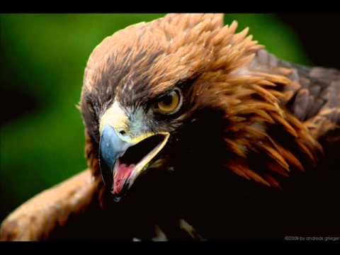 Pur adler sollen fliegen eigen video.wmv