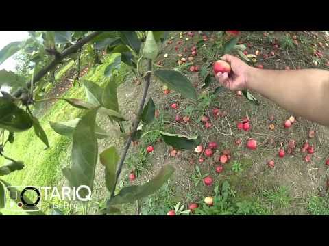 مزارع الريف الانجليزي | GoPro | Copas Farms Pick your Own