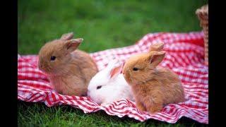 Cuidados na Criação de coelhos em Casa
