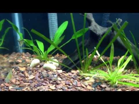How to lower ph quickly easy and natural doovi for How to lower ph in fish tank