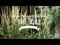 Ornamental Grasses | The Dirt | Better Homes & Gardens