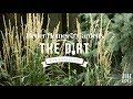 Ornamental Grasses | The Dirt | Better Homes & Gardens