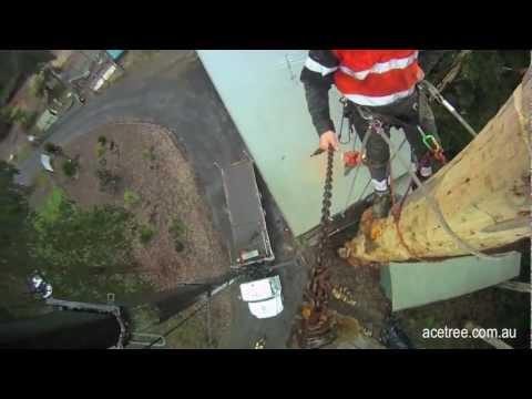 Tree Crane Work Removal Ace Hook Cam