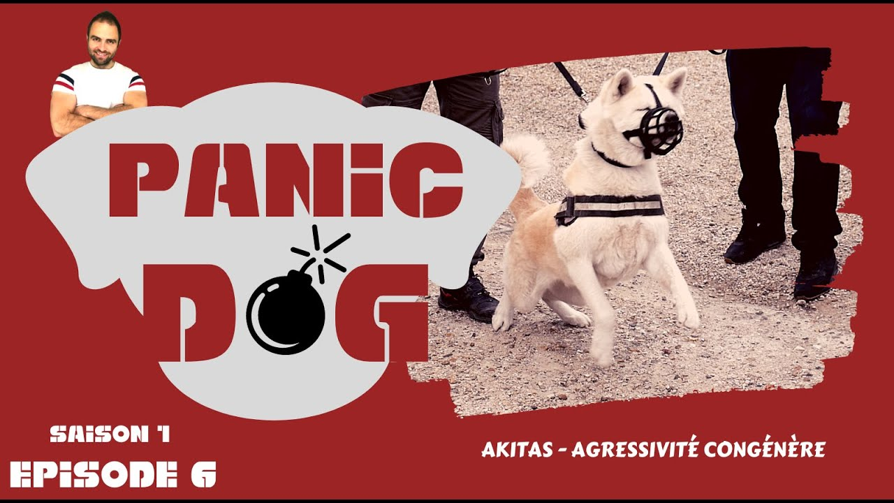 AKITA INU AGRESSIF - PANIC DOG - S1 EP6