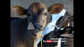 Heavy drought in Kerala : Cattle Farmers under crisis
